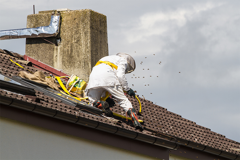 Bee Pest Control in High Wycombe Buckinghamshire